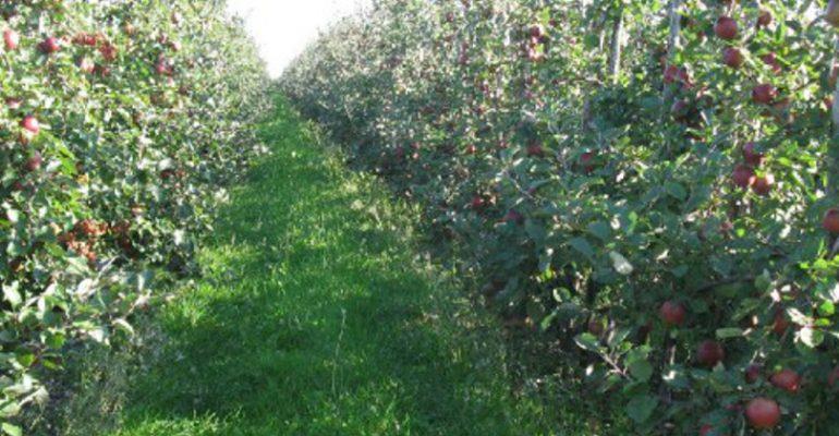 appels-plukken-voedselbank-utrecht